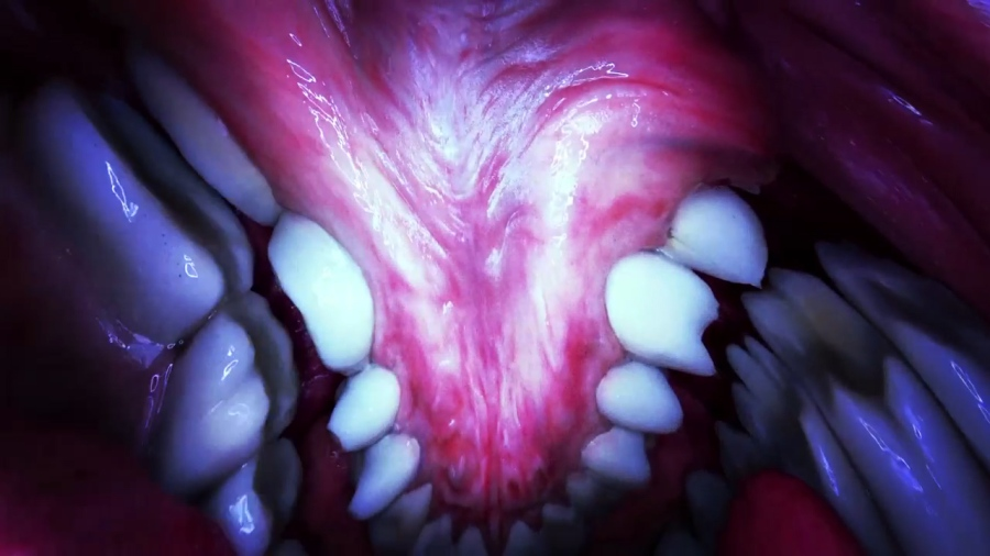 7. Björk - Mouthmantra VR. Directed by Jesse Kanda.jpg